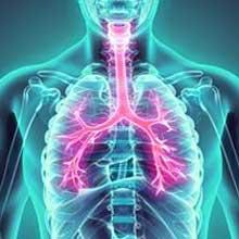 Atemwege & Lunge