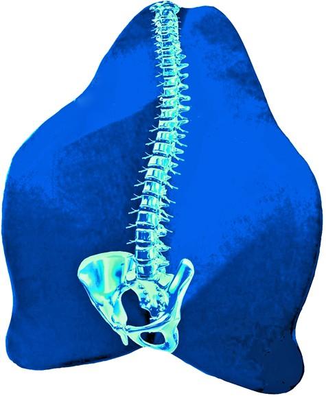 Rückenfreund Polster blau